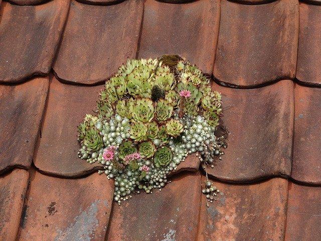 kytka na střeše